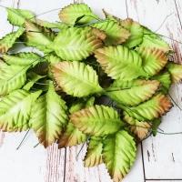 Листья большие, Зелёные (2,5х4см) 10шт.
